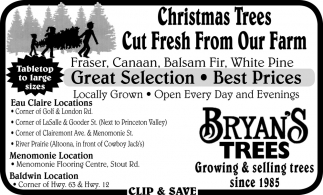 Christmas Trees Cut Fresh from Our Farm